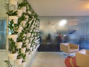 Indoor Plants Hire Melbourne