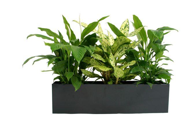 Carripook photo gallery - Indoor desk plants ...
