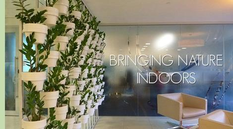 indoor plant hire office plants dandenong hawthorn south melbourne cbd office indoor plants h95 plants